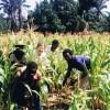 RDC : Pour Kasandji, les champs peuvent remplacer les mines.