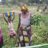 Le gouvernement va récompenser les députés nationaux avec des parcelles loties sur un site reservé aux maraîchères de Kingabwa
