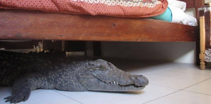sans le savoir il dort avec un crocodile sous son lit the voice of congo. Black Bedroom Furniture Sets. Home Design Ideas