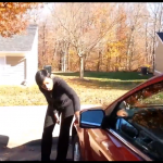Trompée par son petit ami, elle décide de se venger contre sa voiture. Regardez