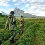 RDC : Des terres du Virunga cédées illégalement