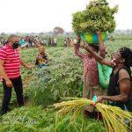 Spoliation d'un terrain à Kingabwa : L'arrêté ministeriel brandi par la famille Mukonzo est un faux