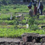 Nord-Kivu : Une coopérative agricole et des associations d'agriculteurs ont signé une pétition pour obtenir la réglementation des mesures des produits vivriers