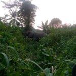 Kongo Central : Un enfant de 16 ans tué par un éléphant en divagation dans les forêts de Lukula