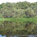 RDC : L'UNESCO a décidé de retirer le parc national de la Salonga de la liste du patrimoine mondial en péril