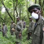 Nord-Kivu : Les gardes de parcs ont repris le contrôle d'une zone de 144 km2 au sein du Parc national de Virunga